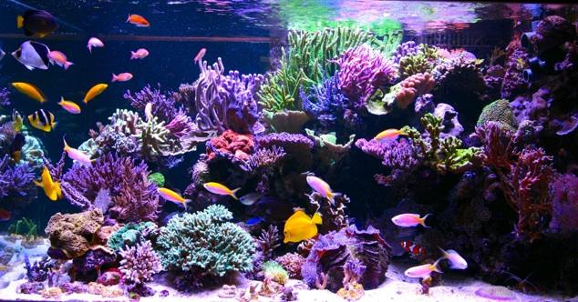 Aquarium Tanne Hoff